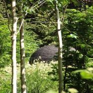 Amanda Broughton Garden Design Image 15