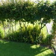 Andrea Sinclair Garden Design Image 6
