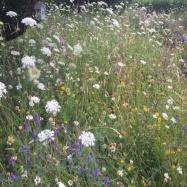 Barry Holman Gardens Ltd Image 2