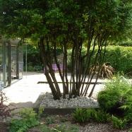 Cheryl Cummings Garden Design Image 5