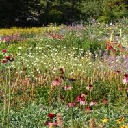 Gallus Gardens Image 5