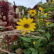 Helene Garden Design Image 2