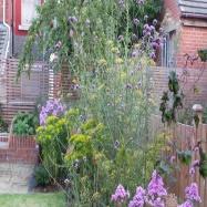 Mary Swan Gardens Image 1