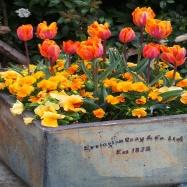 Mary Swan Gardens Image 5