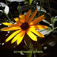Matt Haddon Gardens Image 2