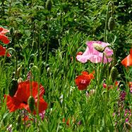 Matt Haddon Gardens Image 4