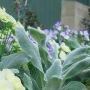 Motif Garden Design Image 5