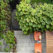 New Barn Garden Design Image 2