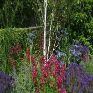 New Forest Garden Design Image 1