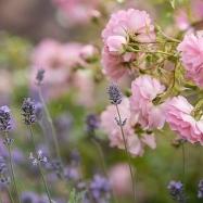 Nina's Garden Image 4