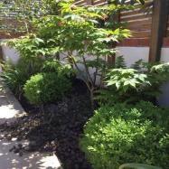 Philip Knight Gardens Image 6