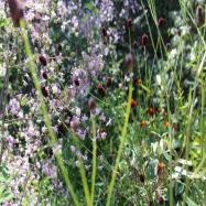Philip Knight Gardens Image 10