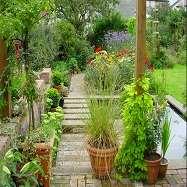 Plant Life Landscapes Image 2