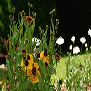 Rachel Bailey Garden Design Ltd Image 2
