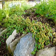 Rachel Bailey Garden Design Ltd Image 4