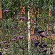 Verde Image 2